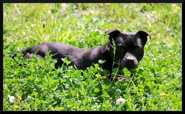 Calli – Femelle – 11 ans (Adoptée !)