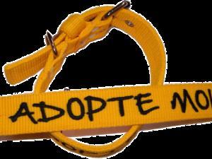 Collier nylon «Adopte-moi»