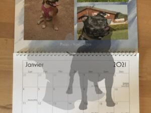Calendrier Staffie Rescue 2021