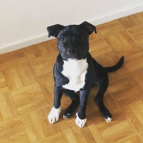 Pogo – Mâle – 18 mois (en cours d'adoption)